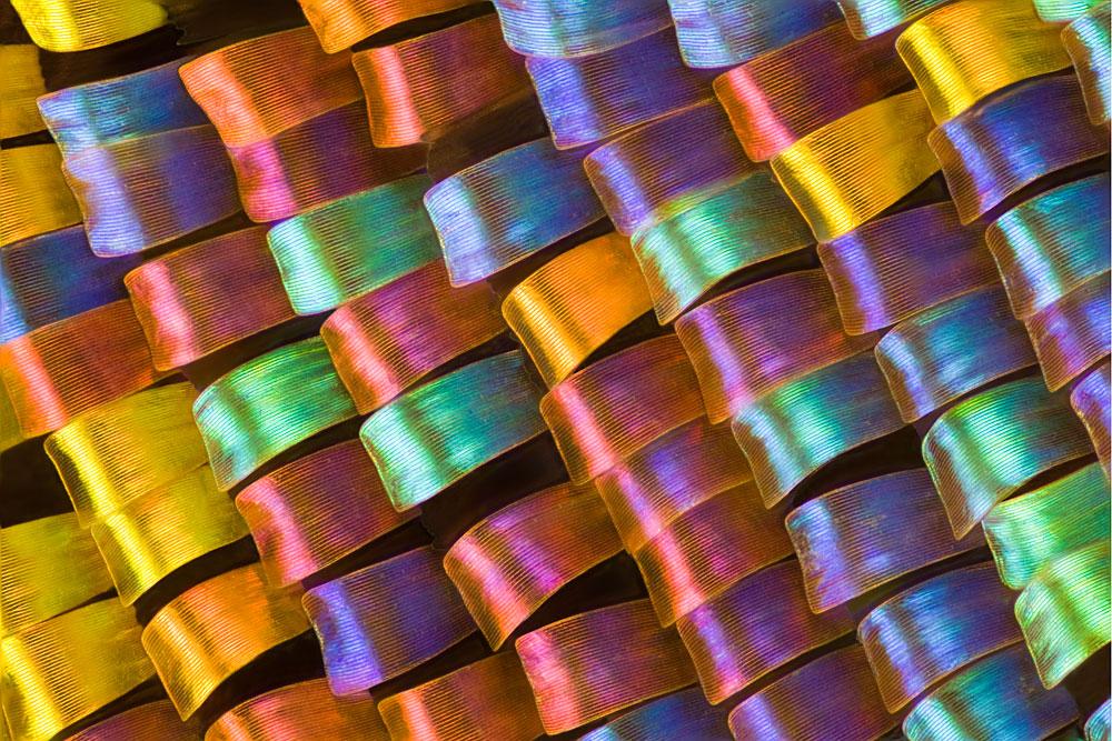 10 neuveriteľných fotografií motýlích krídel vytvorených pod mikroskopom