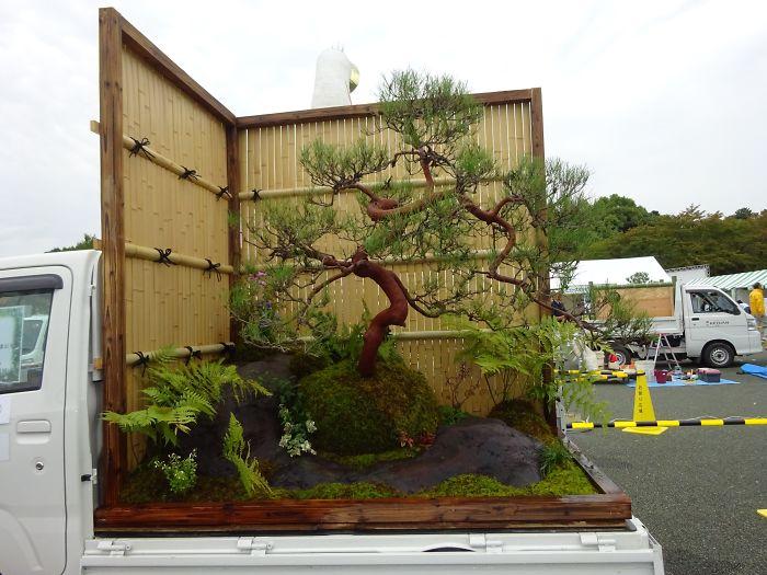 japonská záhrada s bonsajom